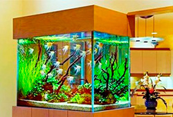 Оформление аквариумов в Молдове, Кишиневе