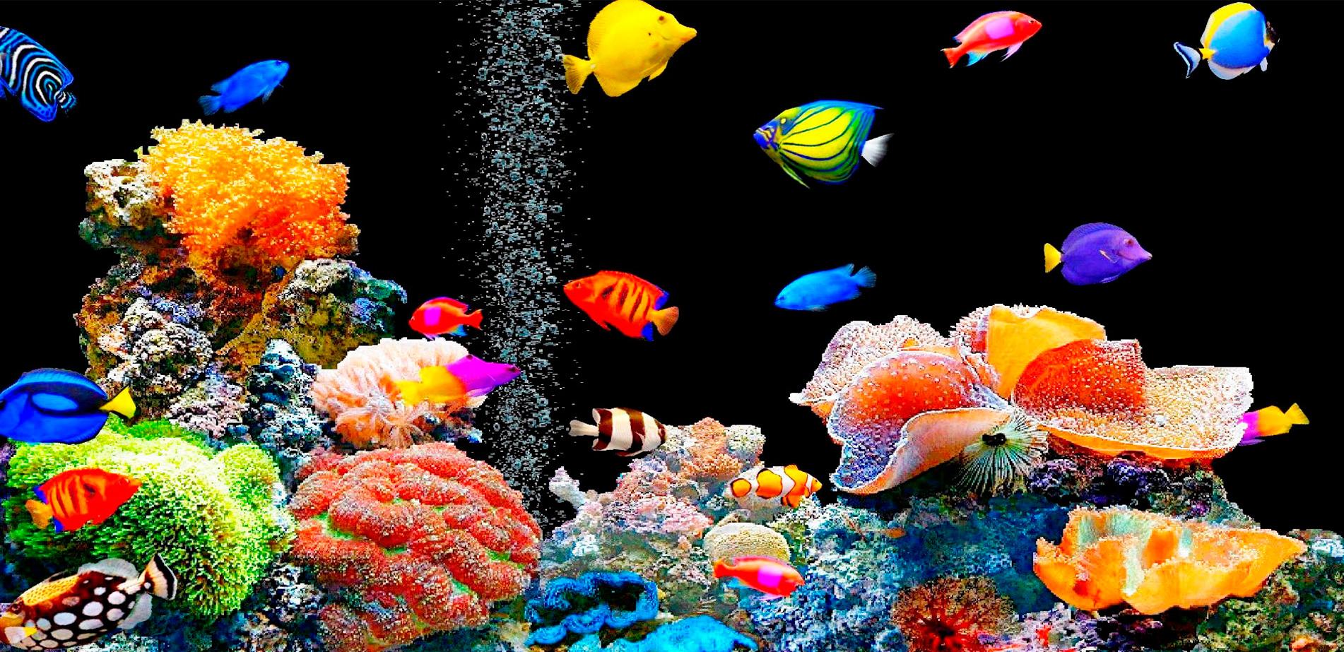 Оформление и заселение аквариумов в Молдове, Кишиневе