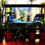 Аквариум с искусственными растениями в Молдове
