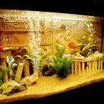 Оформление, заселение разных типов аквариумов в Молдове, Кишиневе