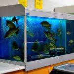 Торговый аквариум в магазине в Молдове, Кишиневе